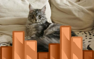 How to Keep a Maine Coon Growth Chart?