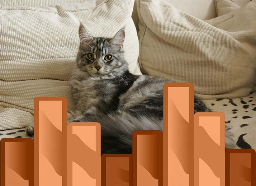Maine Coon Growth Chart